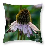 Parched Purple Petals Throw Pillow