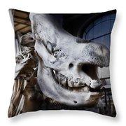 Paris Gallery Of Paleontology 3 Throw Pillow