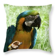 Parrot Eating Nut Throw Pillow