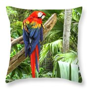 Parrot In Tropical Setting Throw Pillow