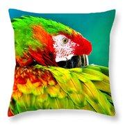 Parrot Time 2 Throw Pillow