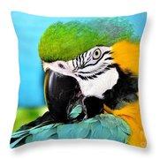 Parrot Time 3 Throw Pillow
