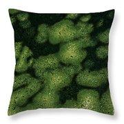 Parrotia Persica Throw Pillow