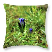 Parry's Mountain Gentian Throw Pillow