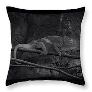 Parson's Chameleon - Unique Prospective Throw Pillow