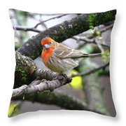 Partial-migrator House Finch Throw Pillow