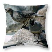 Partridge Pair Reno Nv Throw Pillow