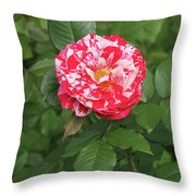 Party Rose #3 Throw Pillow