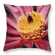 Pasque Flower Macro Throw Pillow