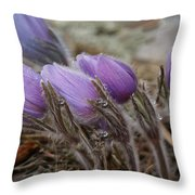 Pasque Flower Watercolor Throw Pillow