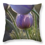 Pasque Shadows Throw Pillow