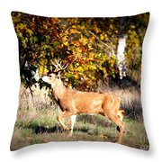 Passing Buck In Autumn Field Throw Pillow