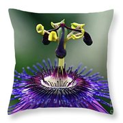 Passion For Purple  Throw Pillow