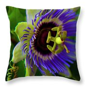 Passion-fruit Flower Throw Pillow by Betsy Knapp