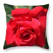 Passion Rose Throw Pillow