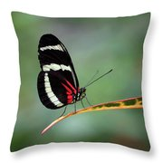 Passion-vine Butterfly 2017 Throw Pillow