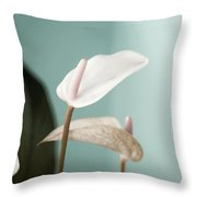 Pastel Color Of Anthurium Flower Throw Pillow