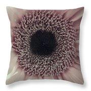 Pastel Pink Daisy Throw Pillow