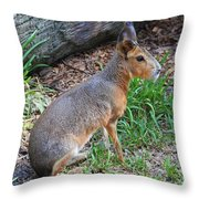 Patagonian Cavy IIi Throw Pillow