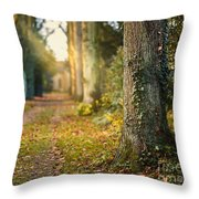 Path Into The Light Throw Pillow