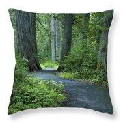 Path Through The Cedars Throw Pillow
