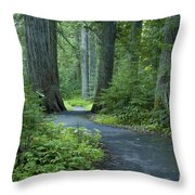 Path Through The Cedars Throw Pillow