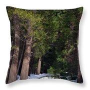 Path To Paradise Throw Pillow