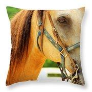 Patient Horse Throw Pillow