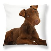 Patterdale Terrier Puppy Throw Pillow
