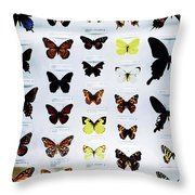 Pattern Made Out Of Many Different Butterfly Species Throw Pillow