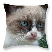 Pauls Little Cat Throw Pillow