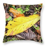 Paw Paw Leaf Fall Colors Throw Pillow