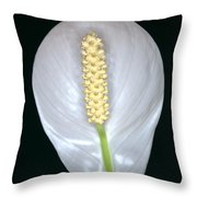 Peace Lily In Flower. Throw Pillow