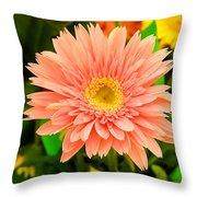 Peach Gerbera Daisy Throw Pillow