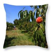 Peach Grove Throw Pillow
