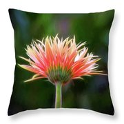 Peach Perfection Throw Pillow