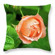 Peach Rose In The Rain Throw Pillow