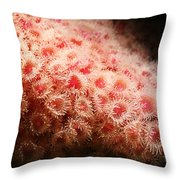 Peachy Urchins Throw Pillow