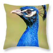 Peacock - 2 Throw Pillow