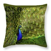Peacock At Frankenmuth Michigan Throw Pillow