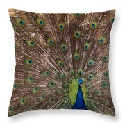 Peacock At The Fort Throw Pillow