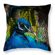 Peacock Closeup Throw Pillow