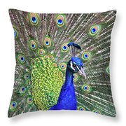 Peacock Colors Throw Pillow