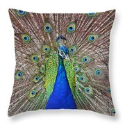 Peacock Displaying His Plumage Throw Pillow