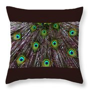 Peacock Feathers Upside Down Throw Pillow