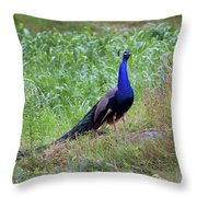 Peacock In Cornfield Throw Pillow
