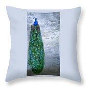 Peacock In Winter Throw Pillow
