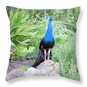 Peacock Landscape Louisiana  Throw Pillow