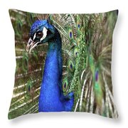 Peacock Mating Season Throw Pillow