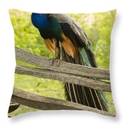 Peacock On Fence Throw Pillow